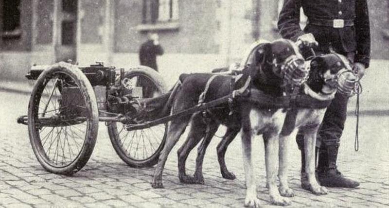 DerHundling-Hundewagen10