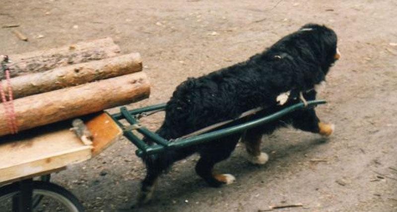 DerHundling-Hundewagen11