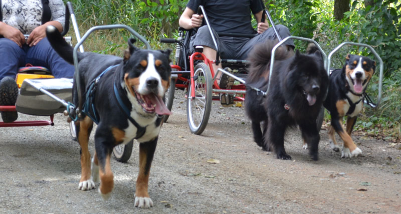 DerHundling-Hundewagen7