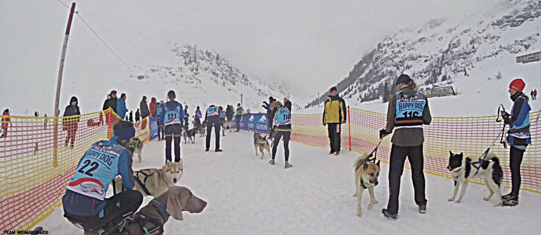 DerHundling-Sportgastein-SchneeCanicross