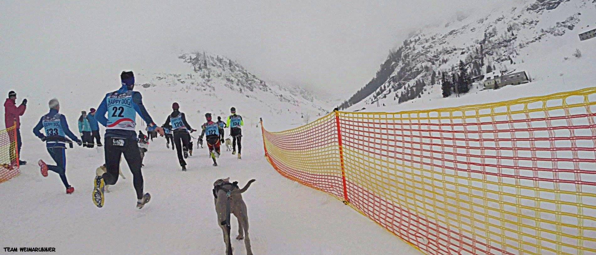 DerHundling-Sportgastein-SchneeCanicross2