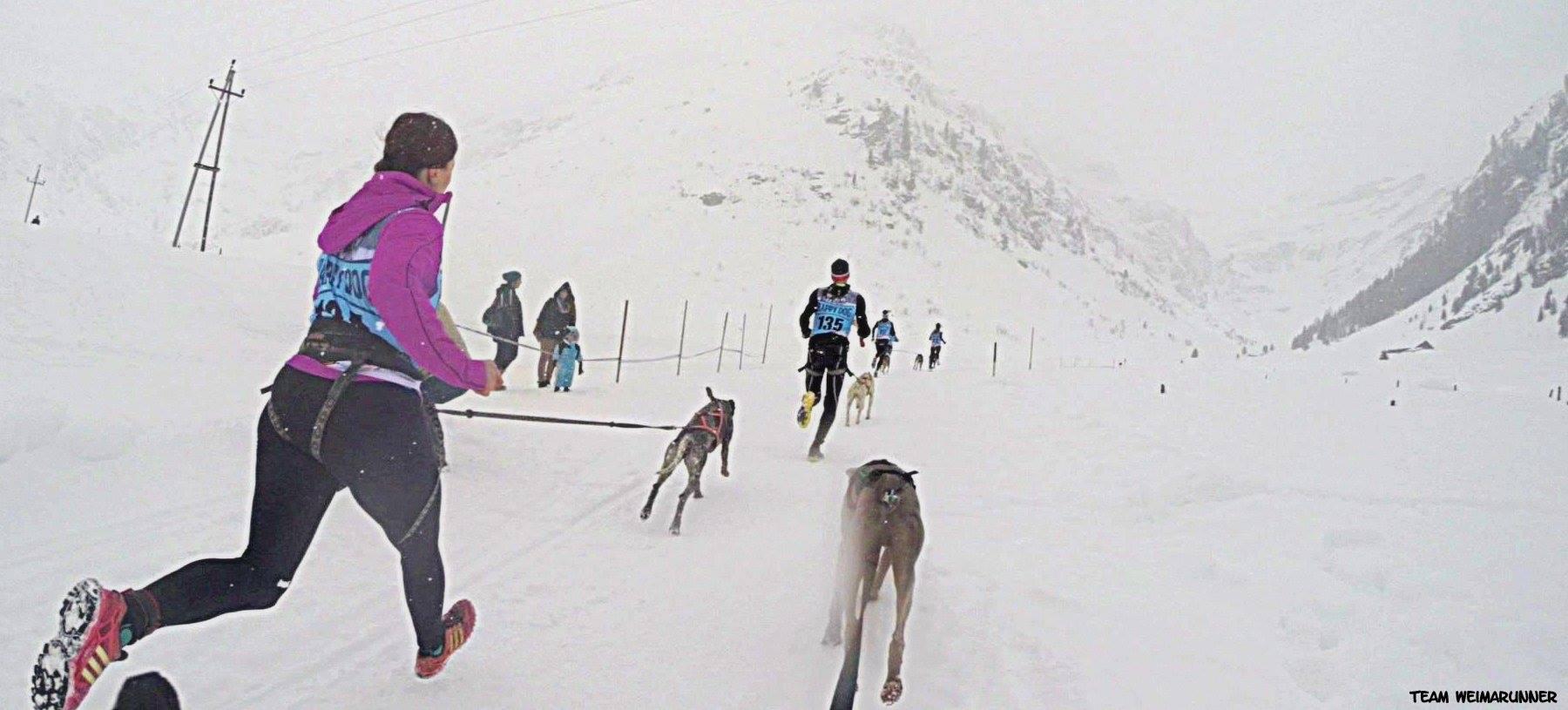 DerHundling-Sportgastein-SchneeCanicross3