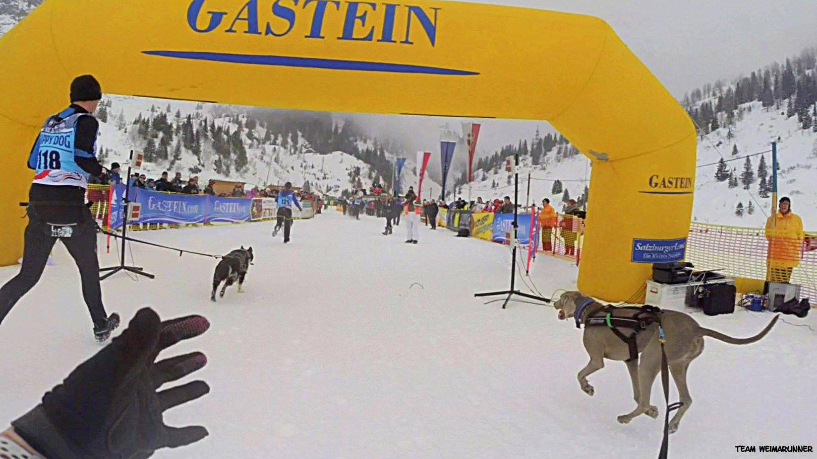 DerHundling-Sportgastein-SchneeCanicross4