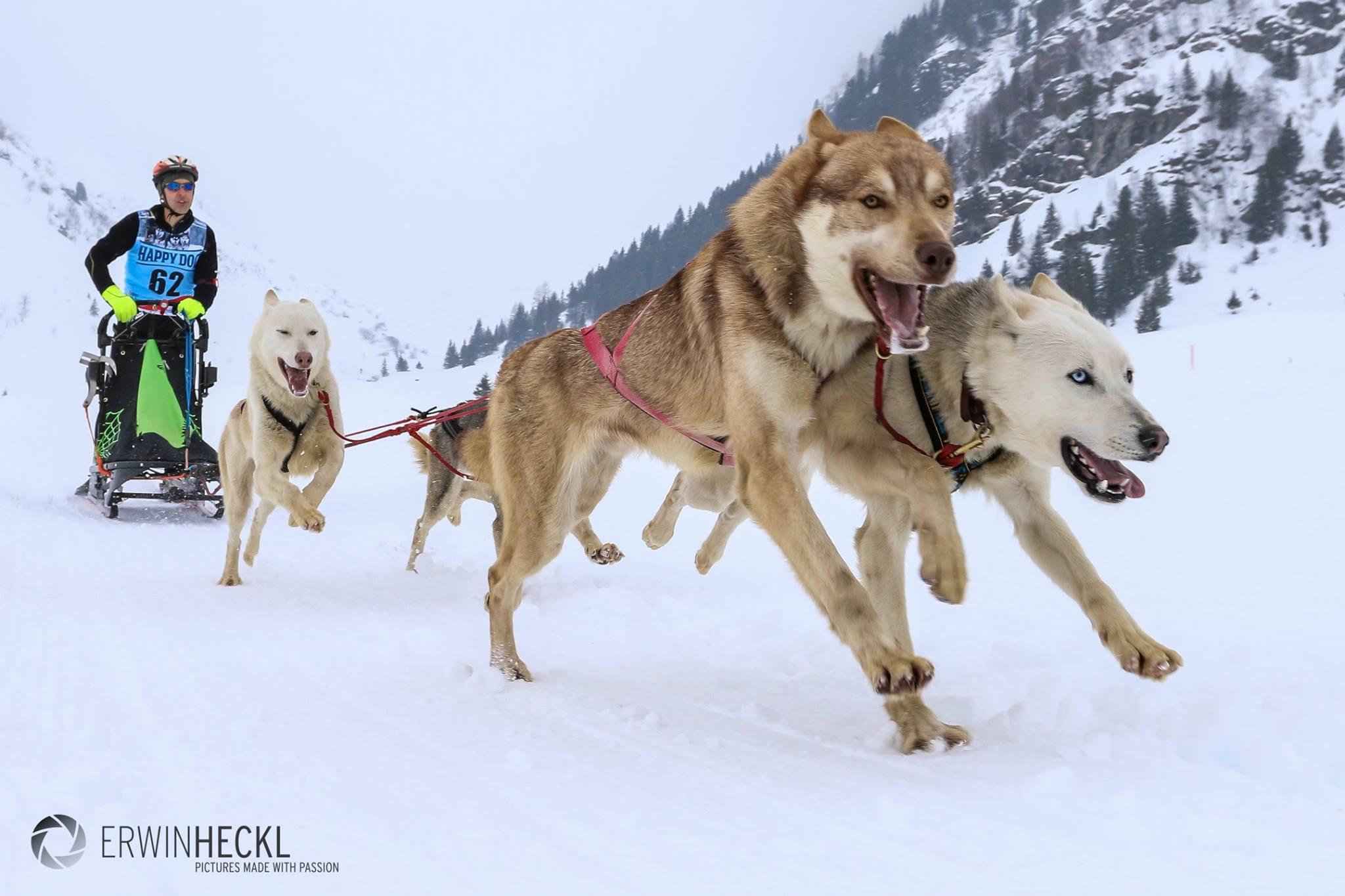 DerHundling-Sportgastein-SchneeCanicross6
